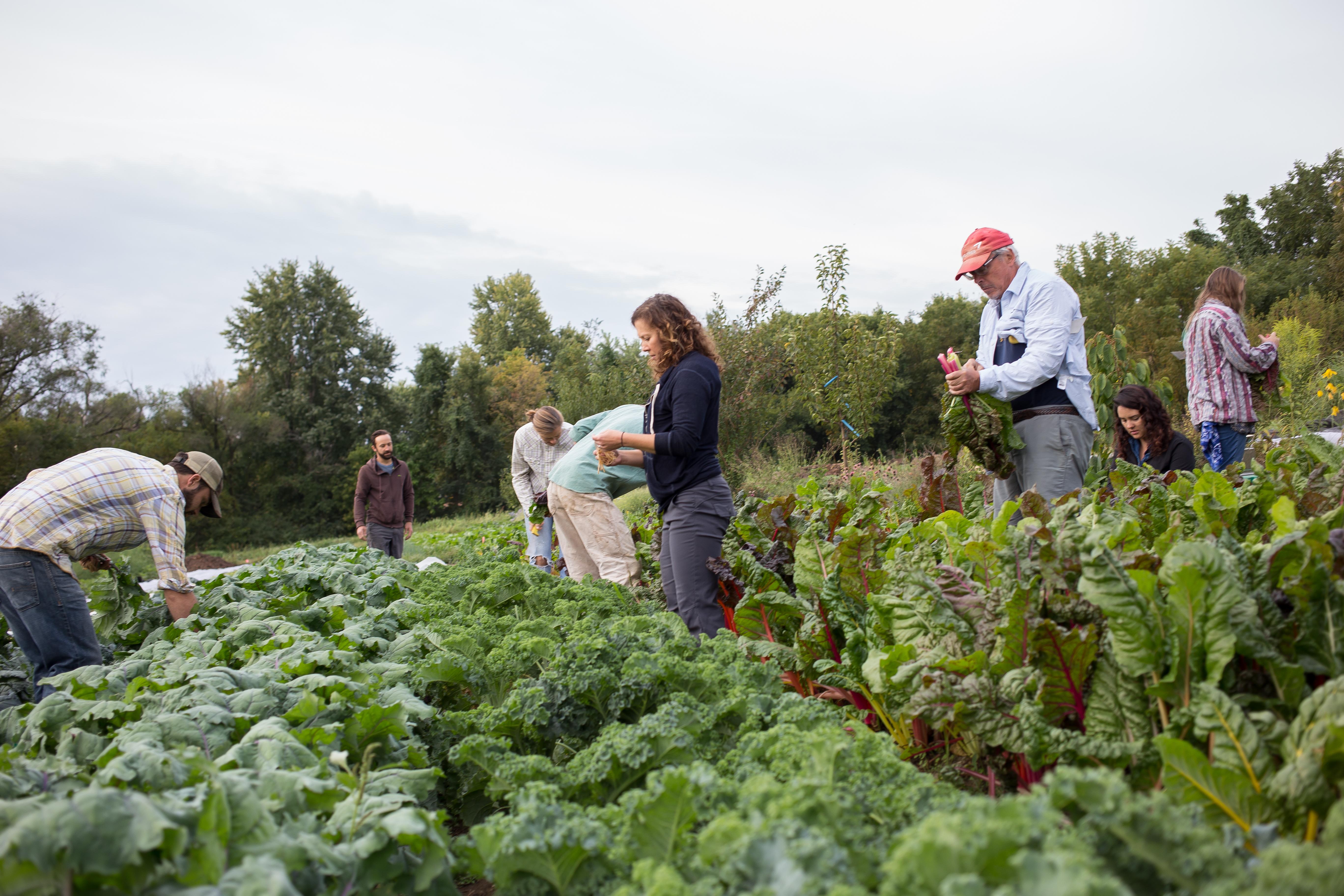 Earthdance Organic Farm School Jobs National
