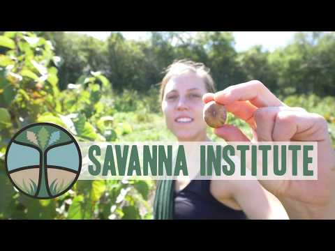 Embedded thumbnail for The Savanna Institute